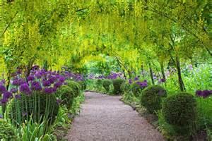 the laburnum arch dorothy clive garden