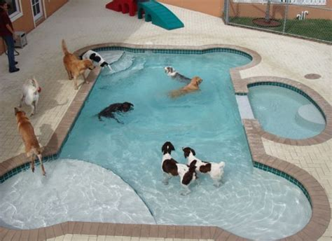 A To From The Adoptable Pets Photo Pool by 17 Best Images About Pool On For Dogs