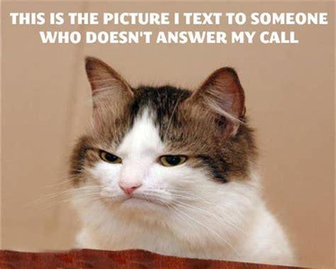 Cat Meme Faces - funny cat faces dump a day