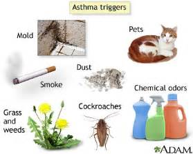 Can Air Fresheners Cause Allergies In Dogs Asthma Triggers West Virginia Asthma Coalition