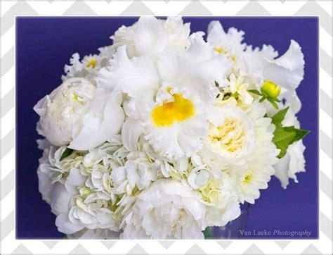 Cattleya Peony 14 best hydrangea s images on white hydrangeas