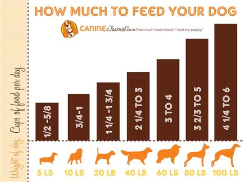 how much should a puppy eat a day how much food should i feed my puppy caninejournal