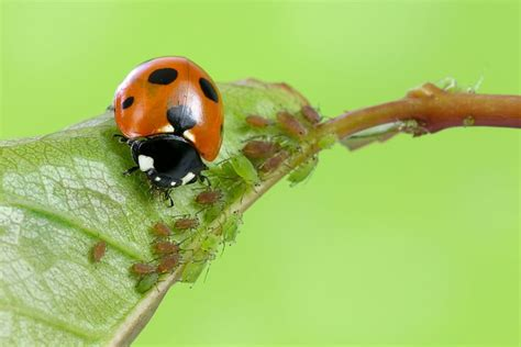 attract beneficial insects   garden