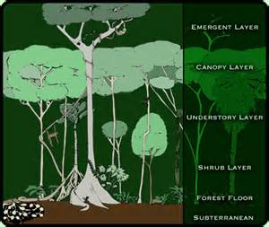 Canopy Layers by Canopy Layer