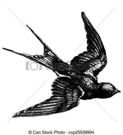 eps vectors of vintage bird vector hand drawing sketch