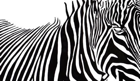 Drawing Zebra Stripes by Zebra Stripes Drawing Photo 8077455 Fanpop