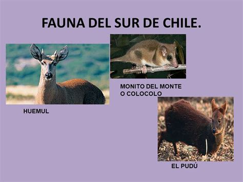 fauna de la zona sur chile en imagenes historia geograf 205 a y ciencias sociales ppt descargar
