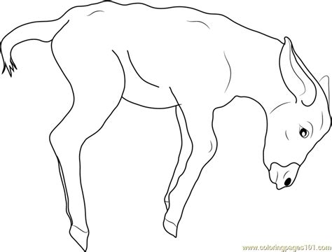 donkey coloring pages preschool donkey coloring pages cl preschool baby donkey coloring