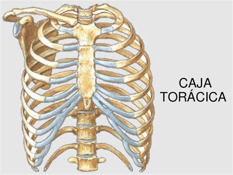 dolore gabbia toracica posteriore caja toracica