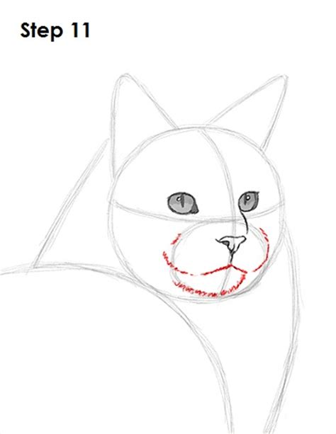 how to muzzle a how to draw a cat muzzle www pixshark images galleries with a bite