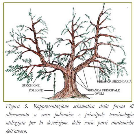 potatura olivo vaso policonico moliseb wine food febbraio 2014