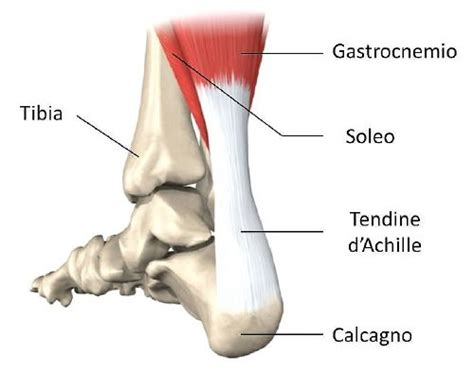 tendinite caviglia interna tendinite sintomi cure e notizie per il podista