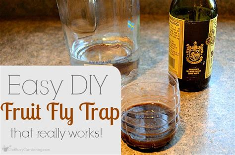 fruit fly trap diy easy diy fruit fly trap that really works get