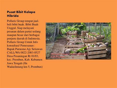 Harga Bibit Kelapa Hibrida Di Medan jual bibit kelapa hibrida di bali harga bibit kelapa