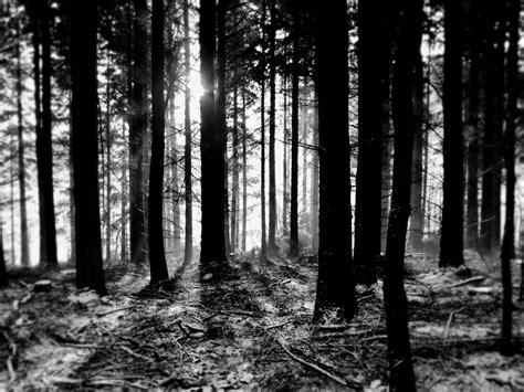 white black forest forest black and white eric g flickr