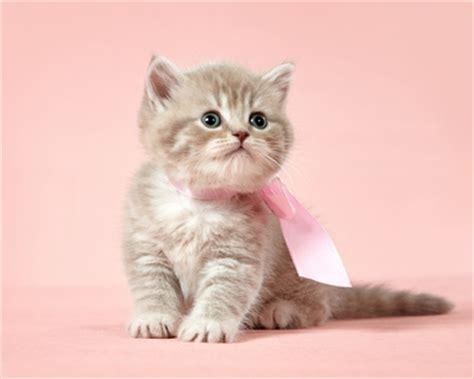 alimenti animali on line accessori per gatti tutte le offerte cascare a fagiolo