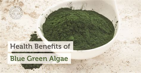 Algae Detox Program by Health Benefits Of Blue Green Algae