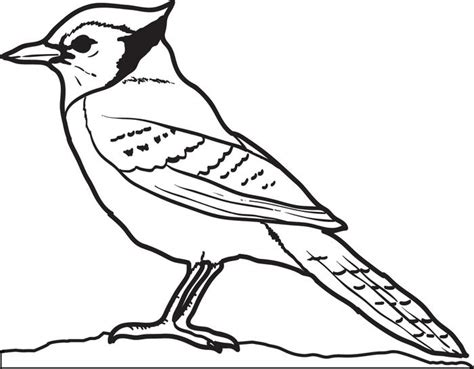 coloring pages blue bird free printable blue jay coloring page for kids