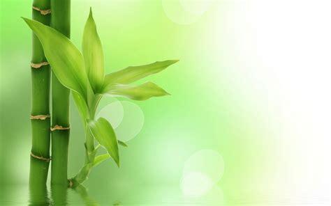 presentation zen powerpoint templates powerpoint background bamboo powerpoint backgrounds for