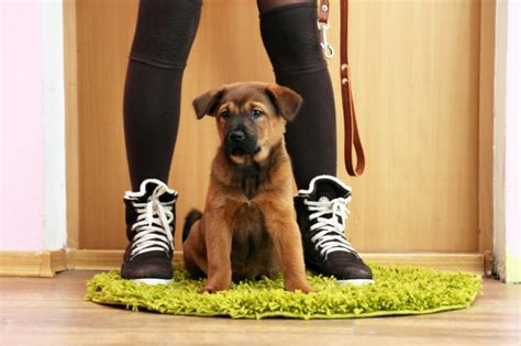 training a puppy to go to the bathroom outside signs puppy needs to go to the bathroom pets4homes
