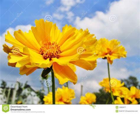 imagenes flores amarillas m 225 s de 1000 ideas sobre flores amarillas en pinterest