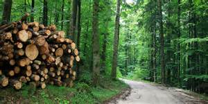 Essay On Importance Of Forest Conservation by Conservation Of Forest And Essay Resource