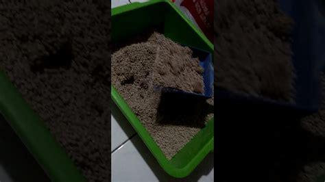 pasir kucing bentonite granule gumpal