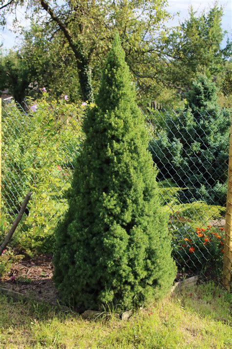 dwarf conifer varieties choosing dwarf conifers for the landscape