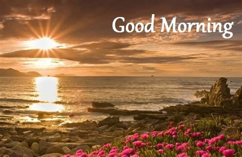 good morning wishes  messages images photo collection mojly