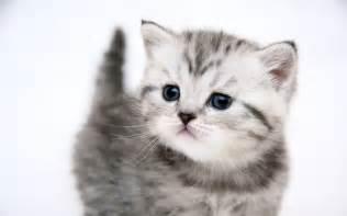 gambar gambar kucing lucu mutiarakatadangambargambar the knownledge