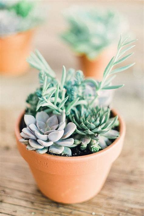 indoor small plants best 25 small indoor plants ideas on pinterest plants
