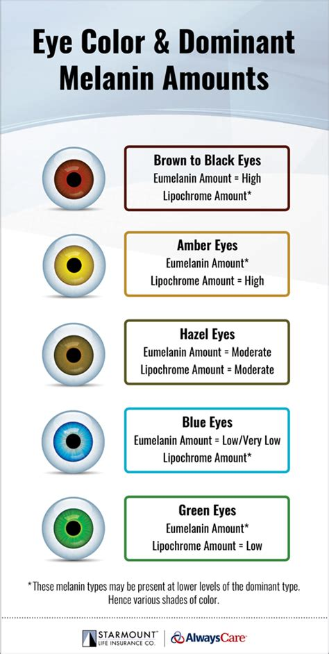 types of eye colors the human eye and eye color smileinsight