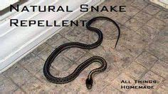 How To Keep Lizards Away From Front Door 1000 Ideas About Keep Snakes Away On Snake Repellant Duck House And Purple Martin