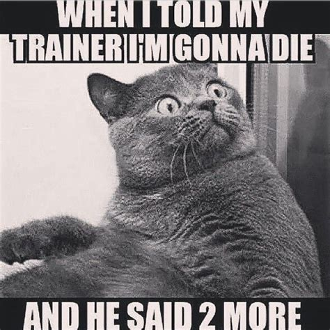 Gym Humor Memes - personal trainer funny fitness pinterest personal