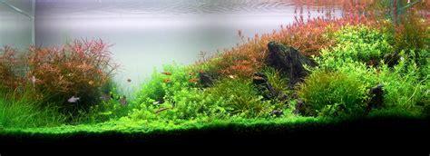 Aquascape Wallpaper Planted Aquarium Wallpapers The Planted Tank Forum