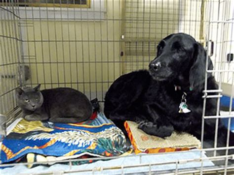 creature comforts marblehead friends of marblehead s abandoned animals about the