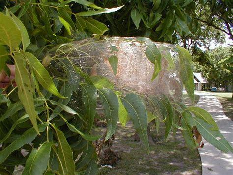 webworms