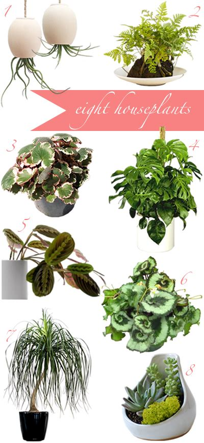 house plants to buy how to buy houseplants once and for all a cup of jo