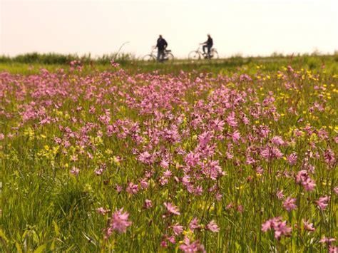 wilde bloemen terschelling polder terschelling