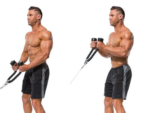 cable hammer curls rope fitness stars