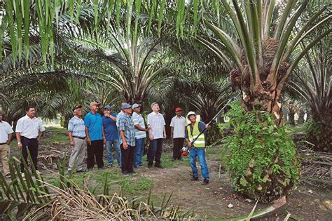 the company of trees a year in a lifetimeâ s quest books the growing palm sector new straits times malaysia