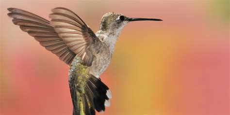 what does google s latest update hummingbird mean for