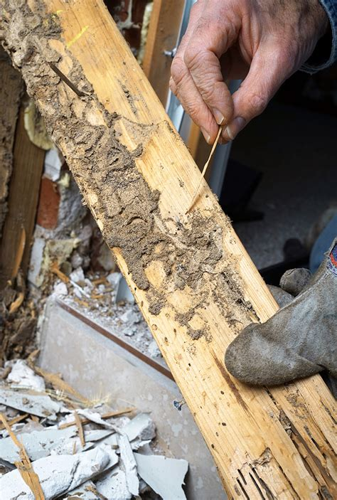 Termite Wood Rot Treatment