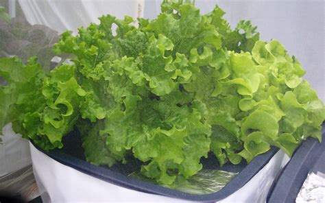 hydroponic container gardening vegetable gardening hydroponic photos posts