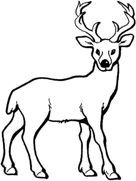 coloring pages animals deer deer coloring pages download and print deer coloring pages
