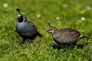 quail 171 san francisco citizen