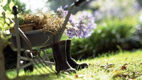 gardening picture save money reduce stress and make tastier meals through