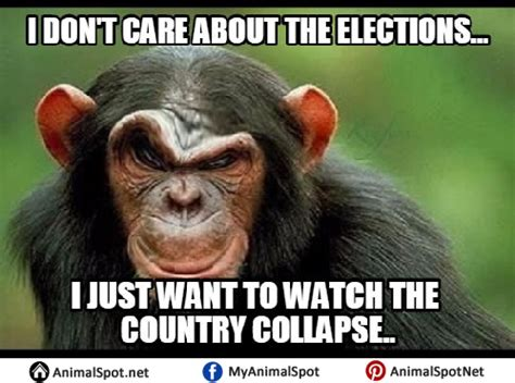 Funny Monkey Meme - monkey face meme 28 images funny monkey meme made my