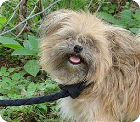 cairn terrier pomeranian mix pet not found