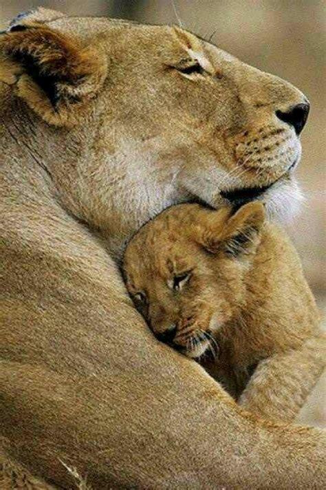 comforting hug comforting hug a hug saved my life